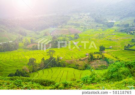 beautiful rice field terrace at Chiang Mai 58118765