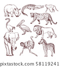 Hand drawn illustrations of african animals 58119241