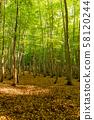 니이가타 신록의 미인 숲 58120244
