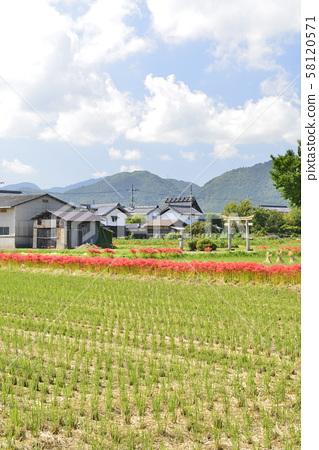 [교토 부 가메 오카시] 피안 꽃의 마을 58120571