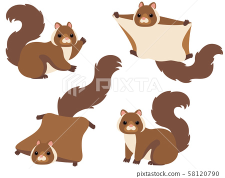 날다람쥐의 일러스트 세트 58120790
