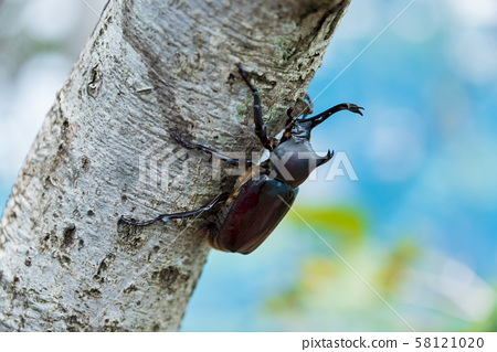 甲蟲暑假夏季昆蟲昆蟲 58121020