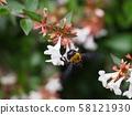 阿貝莉婭和蜜蜂拍打 58121930