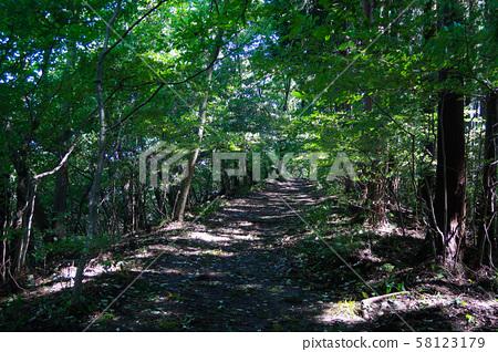 Okutakao's green mountain path 58123179