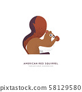 Red american squirrel isolated animal cartoon 58129580