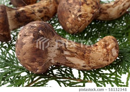 Matsutake mushrooms 58132348