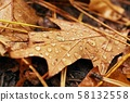 Autumn leaf on ground with raindrops 58132558