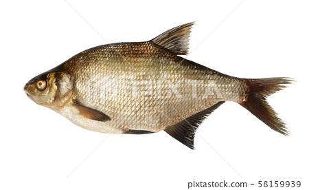 River bream fish 58159939