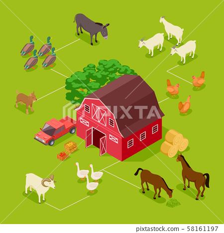Isometric farm vector concept. Livestock, farm birds, barn 3d illustration 58161197