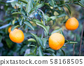 Mandarin orange 58168505