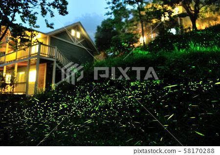 飛舞的螢火蟲 58170288