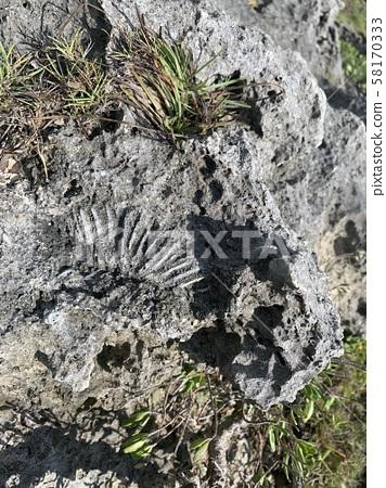 산호의 화석 58170333