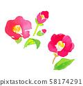 Camellia 2 58174291