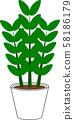 관엽 식물 일러스트 자미오쿠루카스 · 자미호리아 58186179