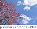 Magnolia 58194946