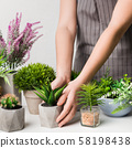 Woman looking after various potted houseplants, crop 58198438