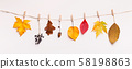 Colorful autumn dry leaves and berries hang up on the rope 58198863