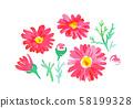 붉은 꽃 58199328