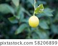 Remon tree 58206899
