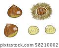 Chestnut 58210002
