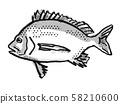 Pikey Bream Australian Fish Cartoon Retro Drawing 58210600