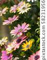 粉紅色的花朵 58231956