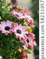 粉紅色的花朵 58231957