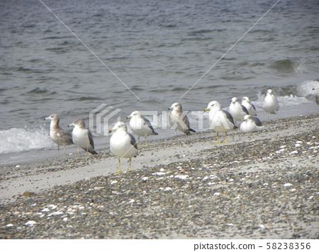 在白色的沙灘上的許多海貓 58238356