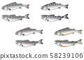 계류 물고기의 일러스트 4 종 2 포즈 세트 58239106