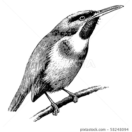 Tody, vintage illustration. 58248094