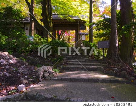 Arima Onsen / Zuihoji Park Autumn Leaves, Sanmon 58258493