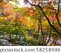 Autumn leaves of Arima Onsen / Zuihoji Park (Nippori Garden) 58258496