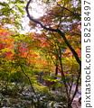 Autumn leaves of Arima Onsen / Zuihoji Park (Nippori Garden) 58258497