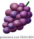 포도 포도 포도 과일 과일 58261864