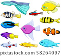Set of twelve different colored tropical fishes 58264097