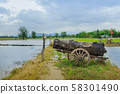 A big timber placed on the old cart look like a cannon at the rice field. 58301490