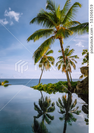 Infinity pool with coconut palm trees and ocean view 58306659