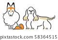 강아지 포즈 표정 2 마리 셰틀 랜드 쉽독 아메리칸 코커 스패니얼 58364515
