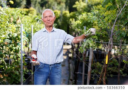 Older man pruning fruit trees 58366350