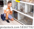 Boy with dog with interest looking at small aquarium with mouses 58367782