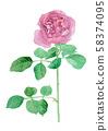 "Rose ""Yves Piaget""장미 ""이부삐앗체"" 58374095"