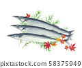 Autumn sword fish Sanma Hiba Maple 58375949