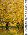 Autumn photo 58389570