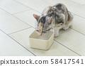 Little cat drinking water 58417541