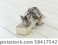 小貓喝水 58417542