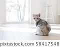 小貓轉過身 58417548