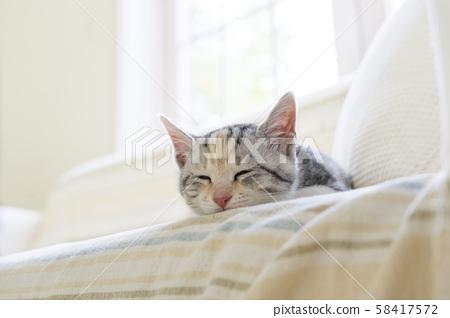 小猫在沙发上睡觉 58417572