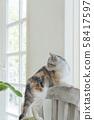 小貓站在椅子上轉過身來 58417597