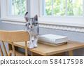 小貓在桌子上 58417598