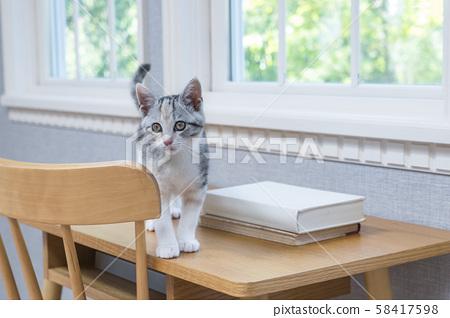 Kitten on the desk 58417598